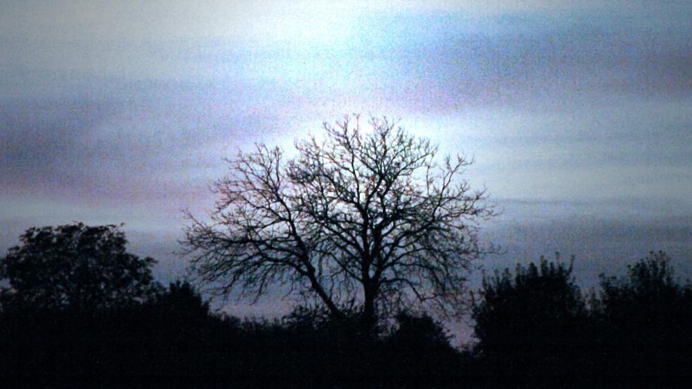 Kahler Baum bei Dämmerung