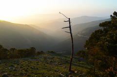 Kahler Baum und Berge (Andalusien)