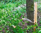 Kahlschlag am 30. April im Wald