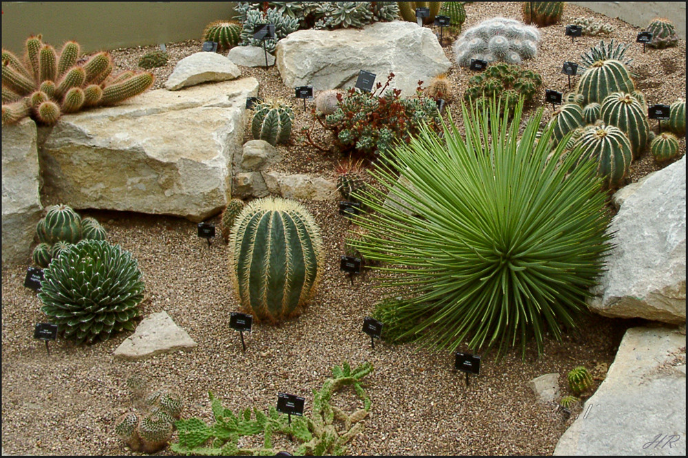 Kakteengarten im Kew Gardens / England