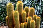 Kakteengruppe im Botanischen Garten