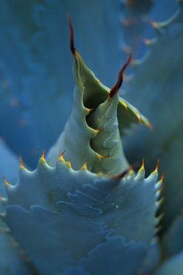 Kaktus aus der Nähe...