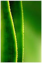 Kaktus- die Farbe des Lebens