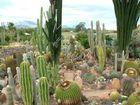 Kaktus Farm