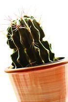 Kaktus - FineArt3