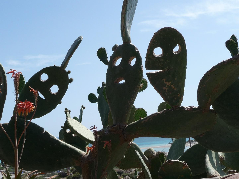 Kaktus-Gesichter bei Elafónissos