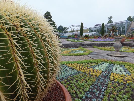 Kaktus im Berggarten Hannover