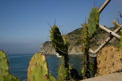 Kaktus in Ischia