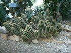Kaktus in Planten & Blomen
