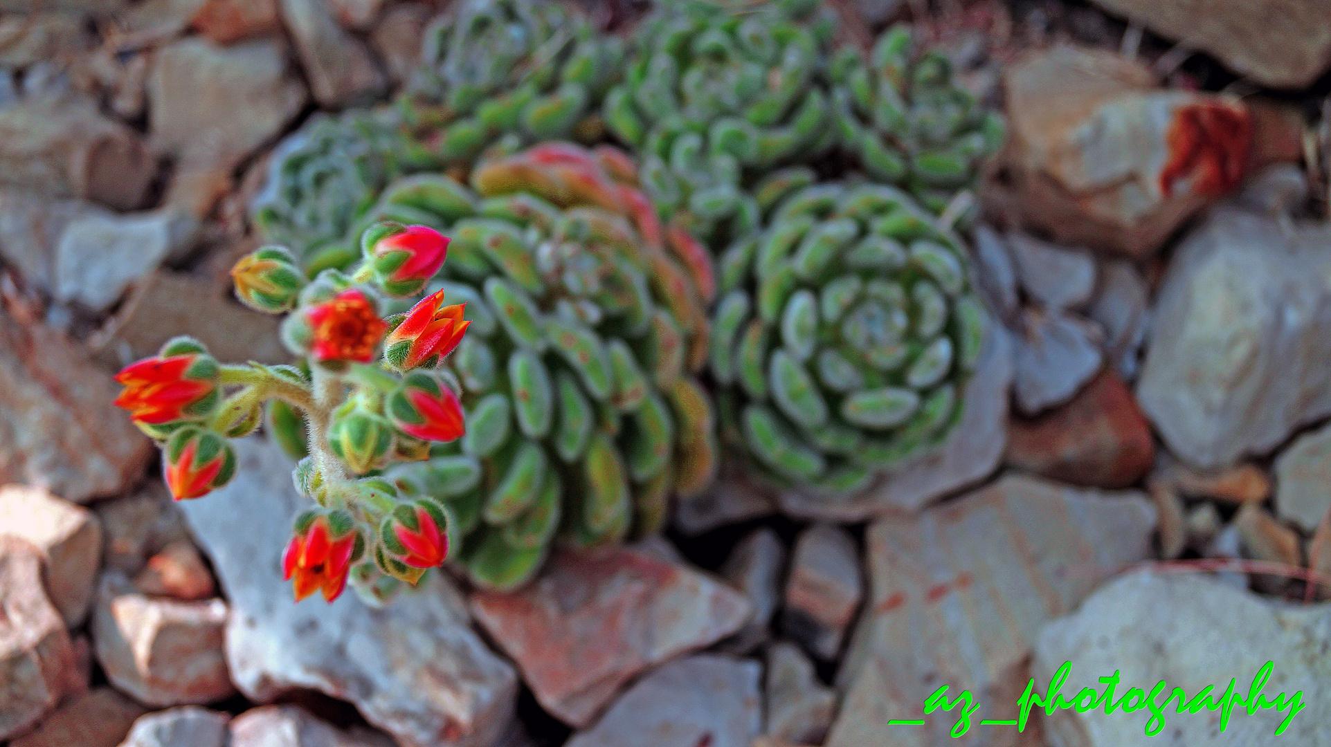 "Kaktus in ""Planten un Bloomen """