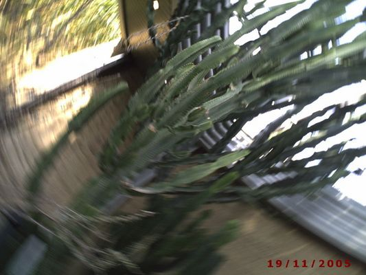 kaktus-karusell