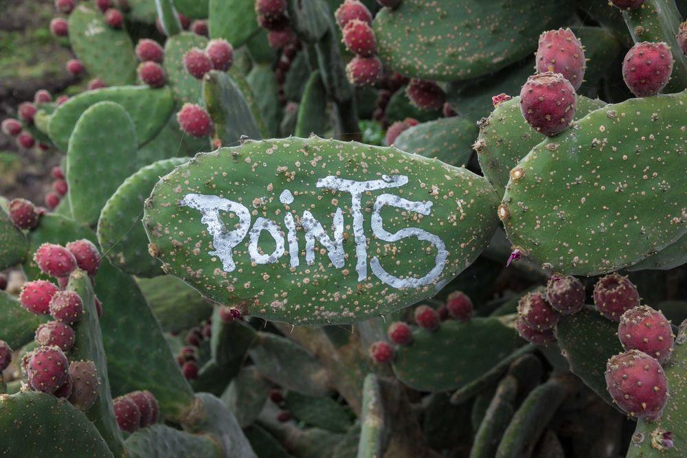 Kaktus-Kunst...