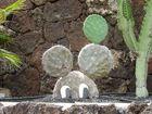 Kaktus Micky-Maus