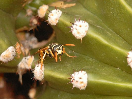 Kaktus mit Bewohner