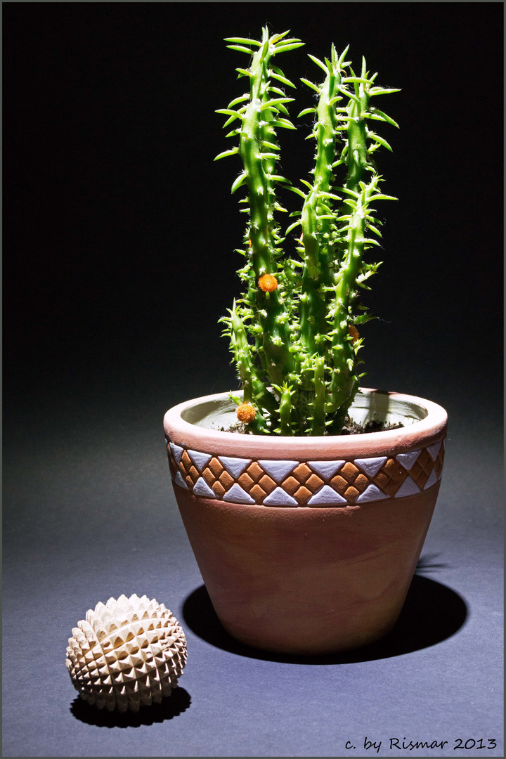 Kaktus mit Licht