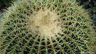Kaktus001