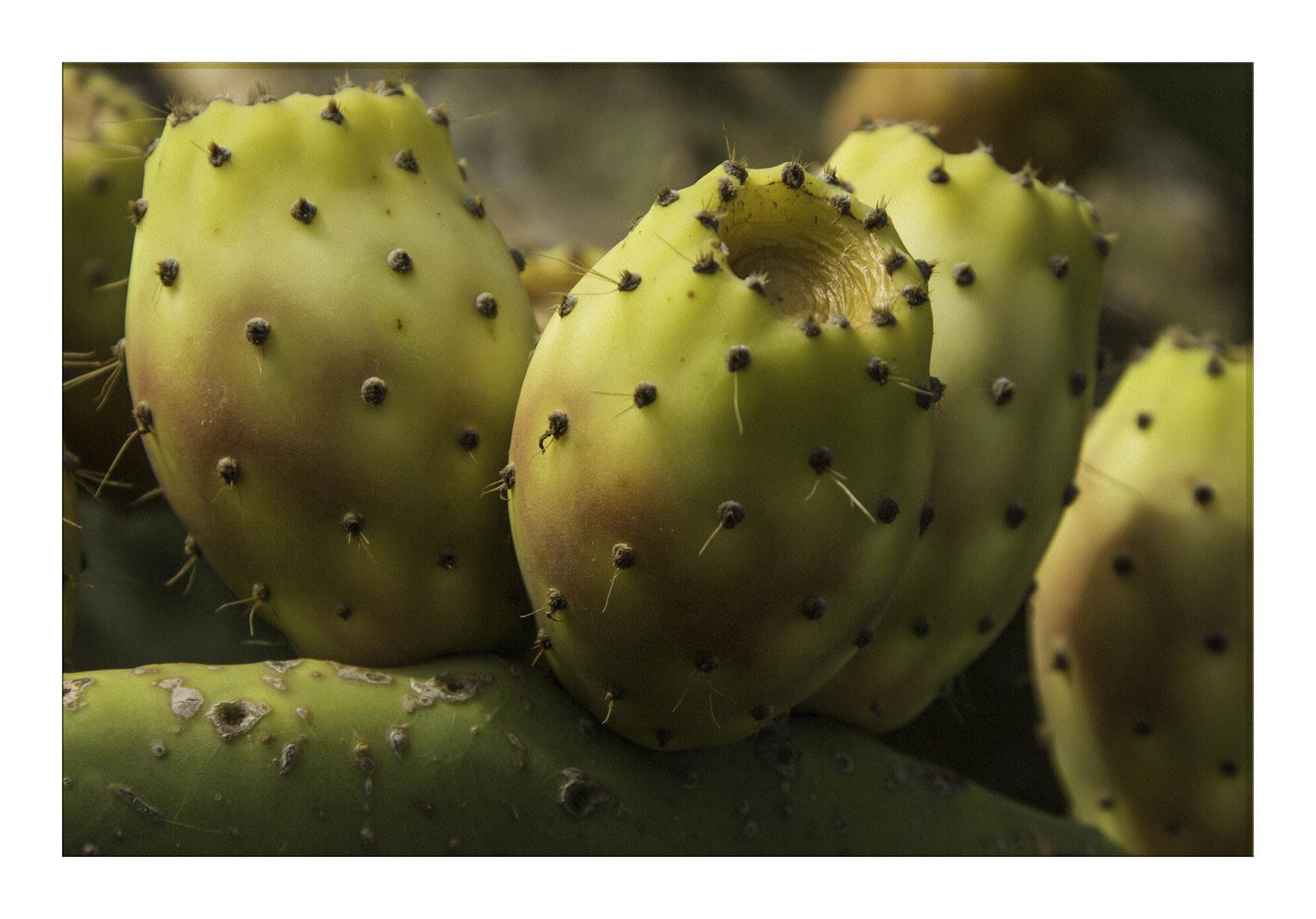 kaktusfeige foto bild pflanzen pilze flechten fr chte und beeren nature bilder auf. Black Bedroom Furniture Sets. Home Design Ideas