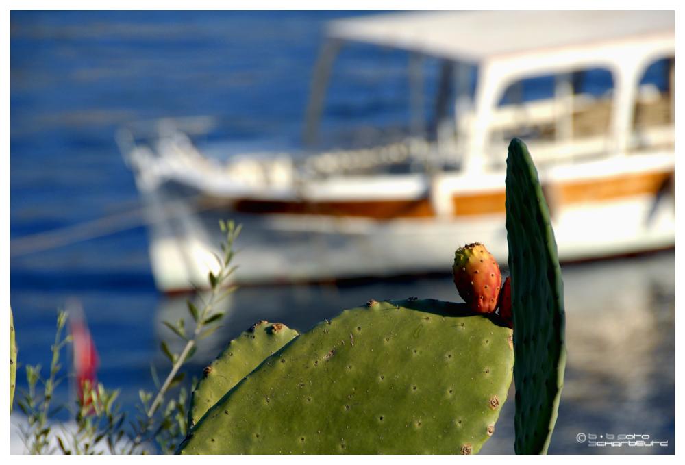 Kaktusfeige mit Aussicht