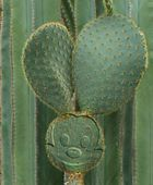 Kaktusmicky