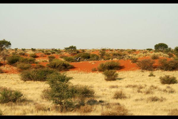 Kalahari-Ausläufe