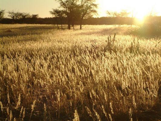Kalahari-Sundown