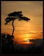 Kalaharifeeling in Südhessen