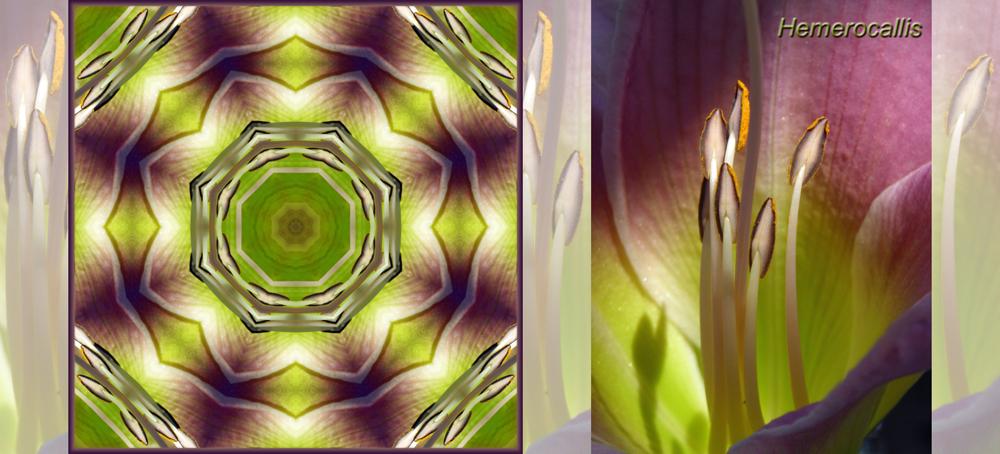 Kaleidoskop Hemerocallis