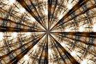 Kaleidoskop vom Wald