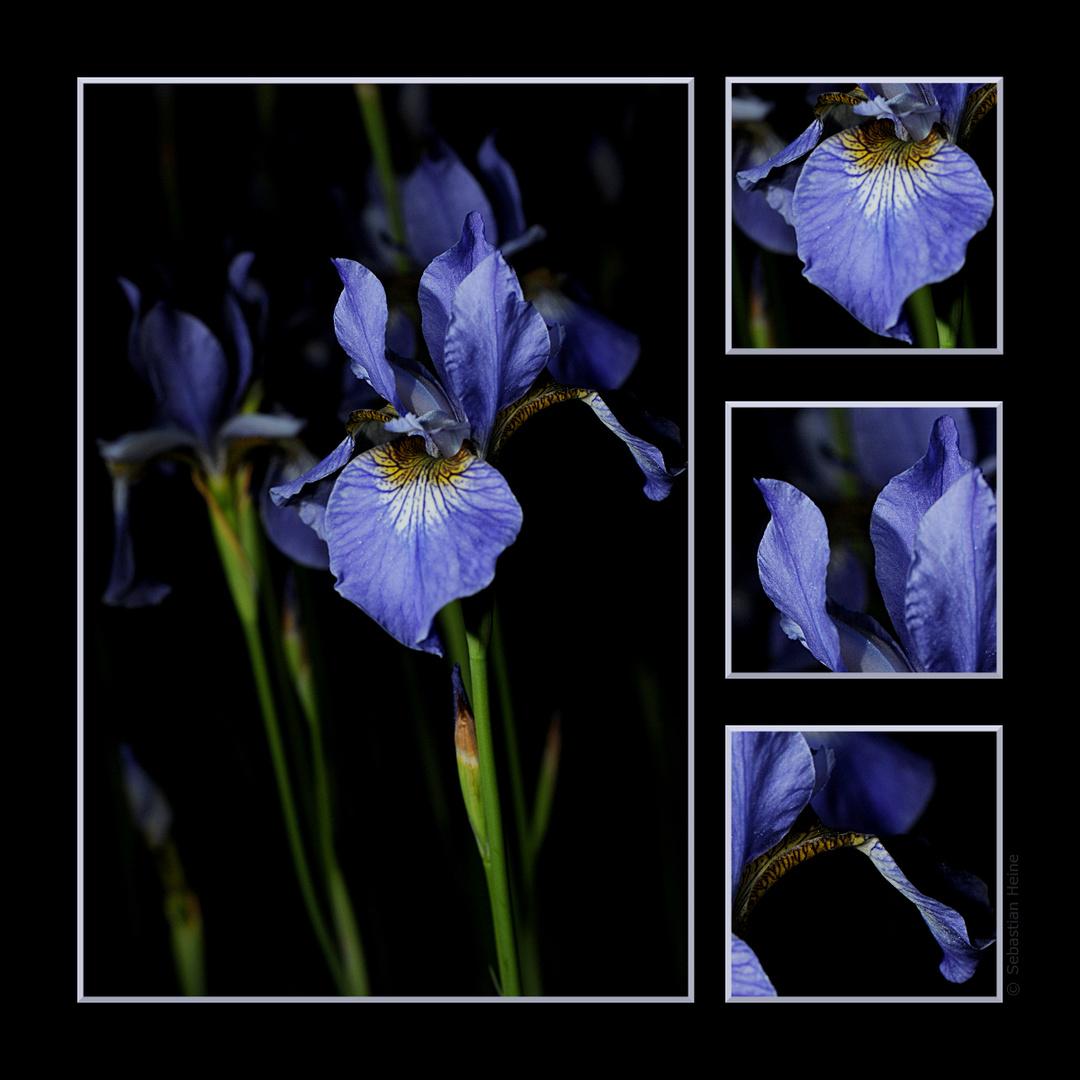 """Kalender """"Blüten bei Nacht"""""""