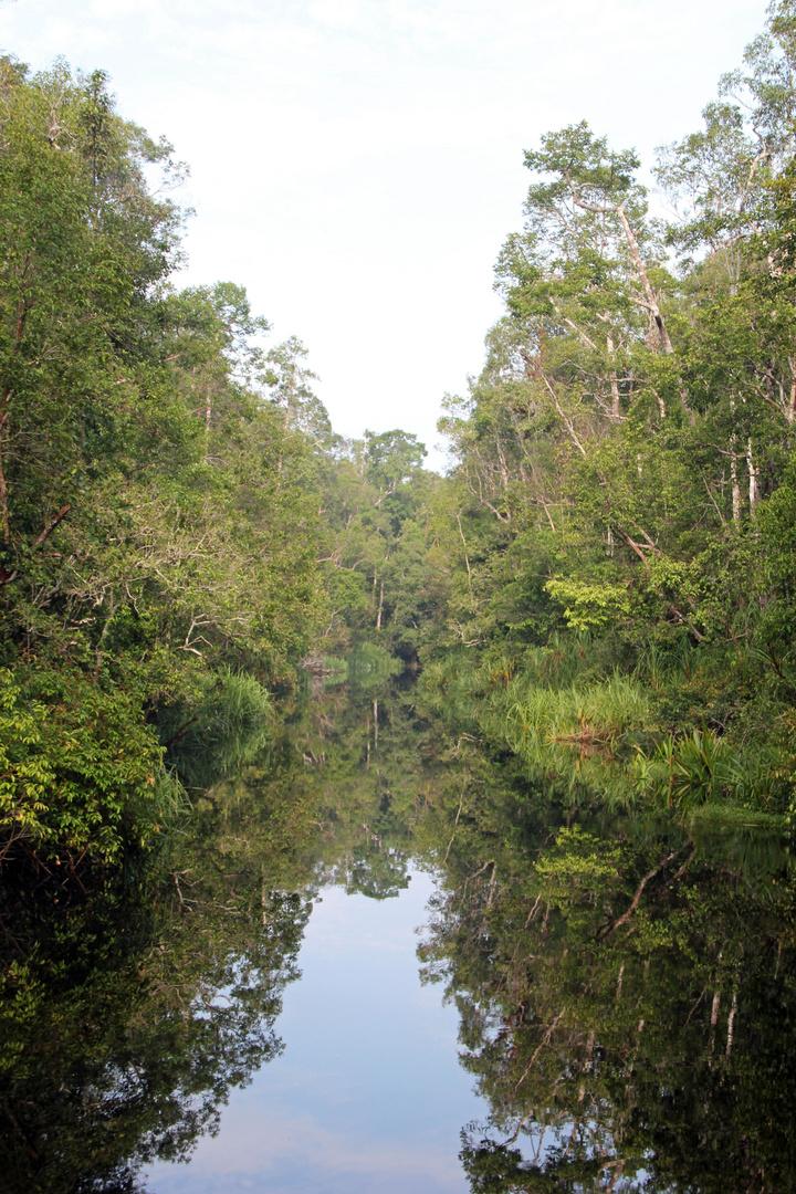 Kalimantan - auf dem Sekonyer River