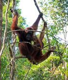 Kalimantan - Mutter mit Kinder