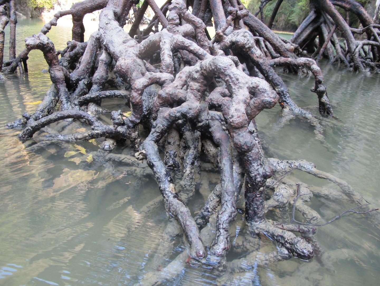kalk und salz ablagerungen auf der mangroven wurzel foto bild pflanzen pilze flechten. Black Bedroom Furniture Sets. Home Design Ideas