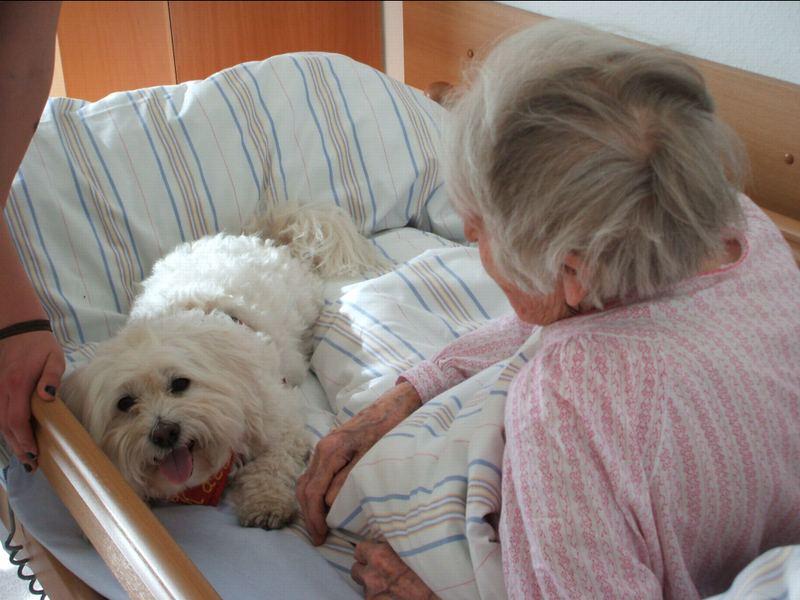 Kalli bestens im Einsatz als Therapiehund