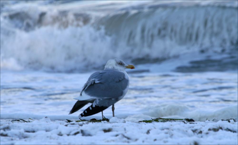 Kalt ist es am Meer..