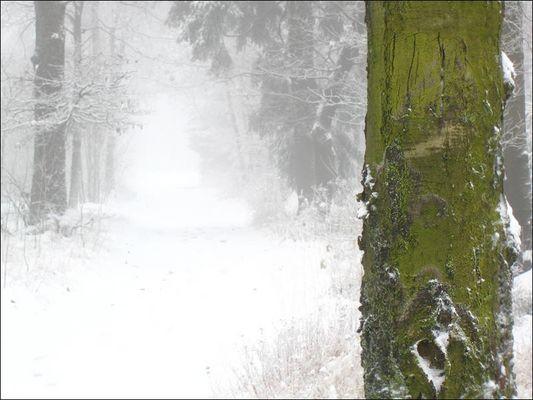 Kalt ist es im Wald