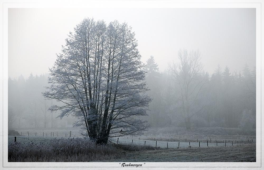 kalt nebliger Rauhreifmorgen im Dezember