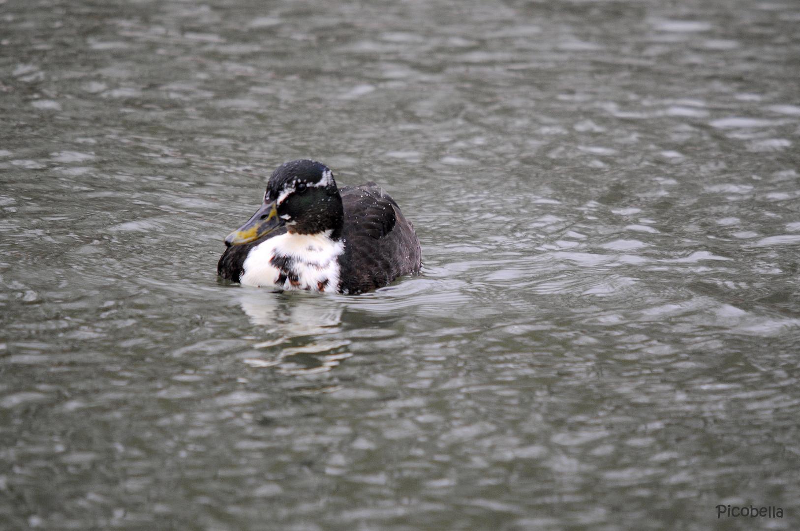 Kalte Ente ;-)