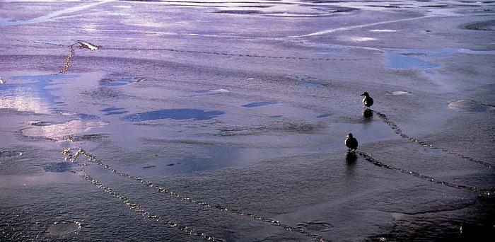 Kalte Füße am Balaton