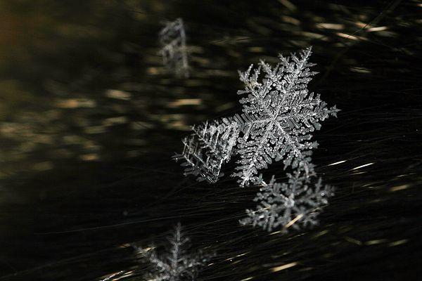 Kalte kleine Schönheiten - Schneeflocken