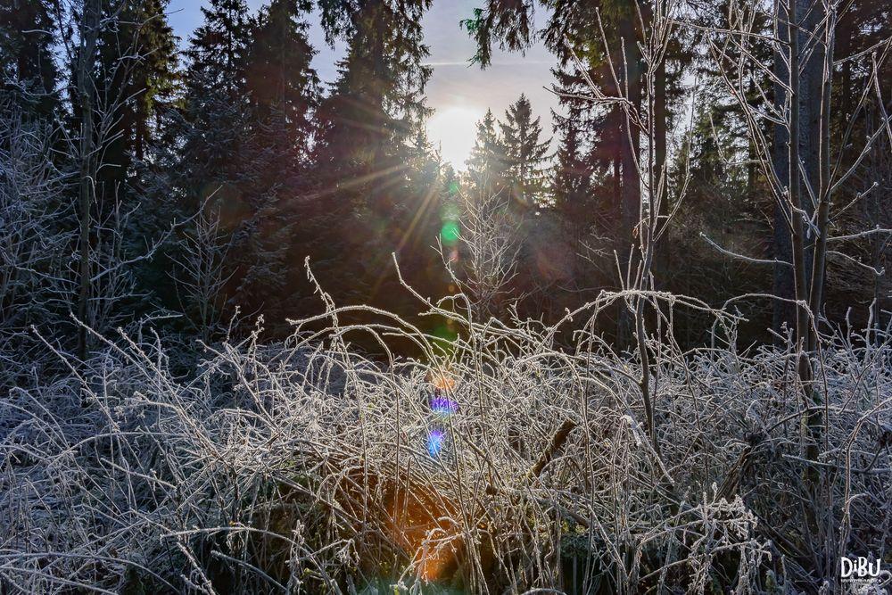 Kalte Sonne 2