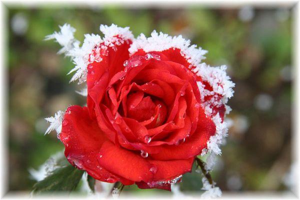 Kalte Umarmung