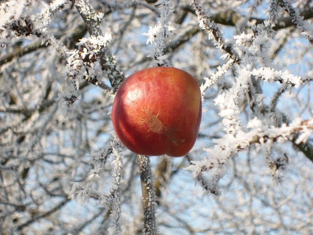 Kalter Apfel