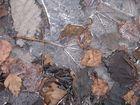 Kalter Herbst