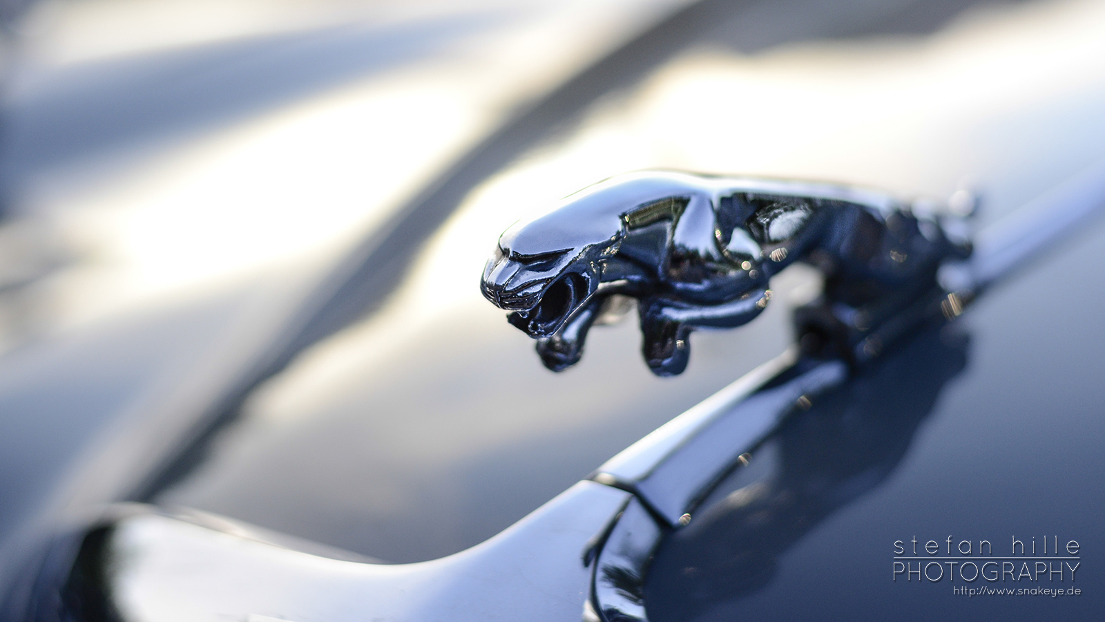 kalter Jaguar
