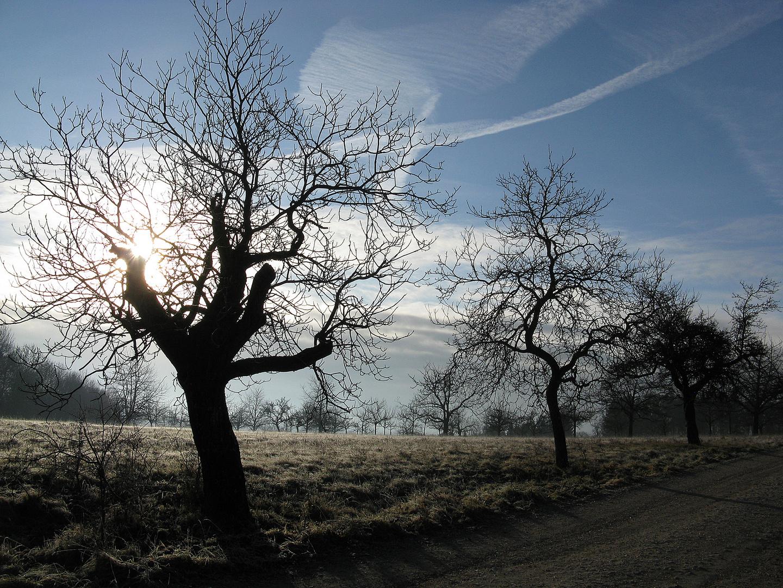 """""""kalter Morgen"""""""