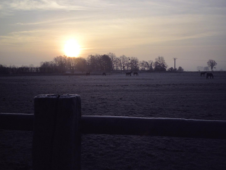 ...kalter Morgen