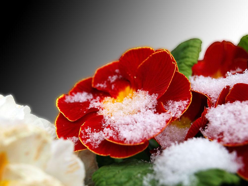 kalter Schnee auf warmen Rot