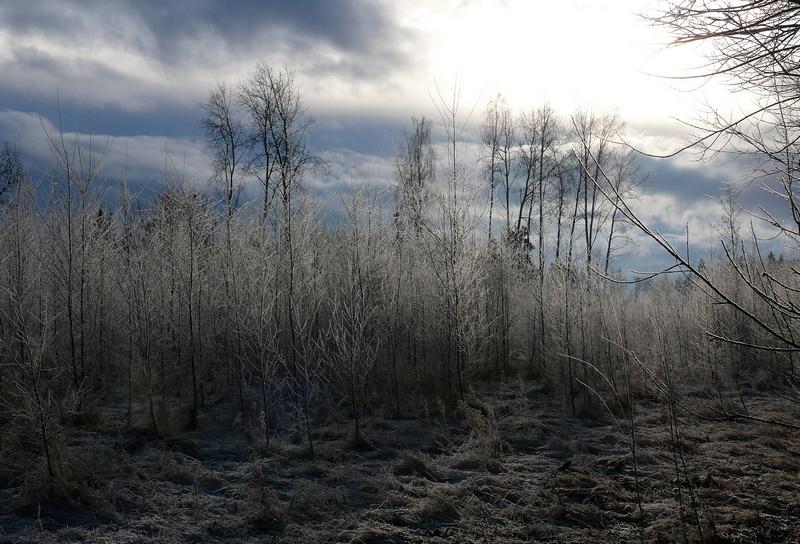 kalter Wald