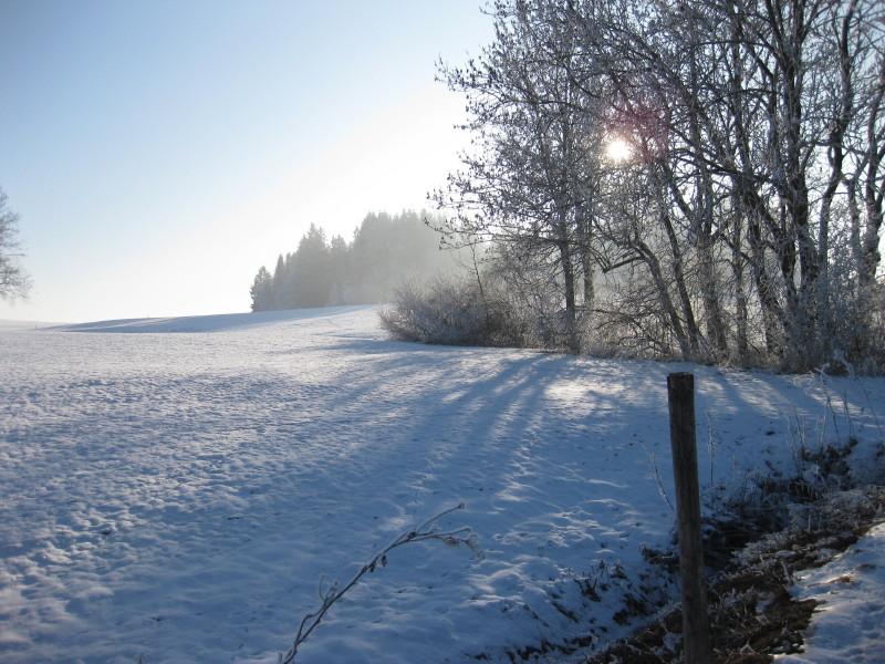 kaltes Allgäu im Sonnenschein