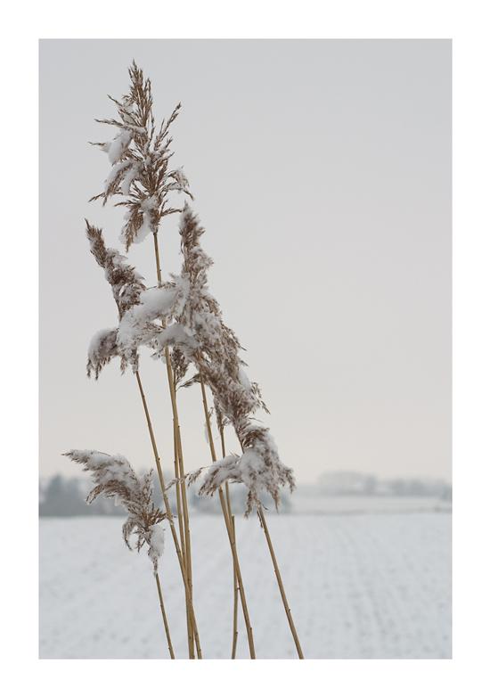 - Kaltes Gras -